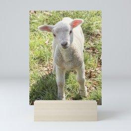 Cute baby spring lamb Mini Art Print