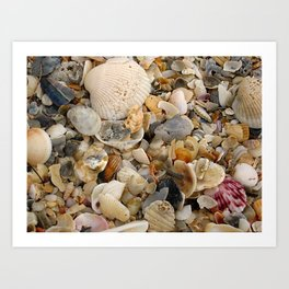 Nature's Seashell Collage Art Print