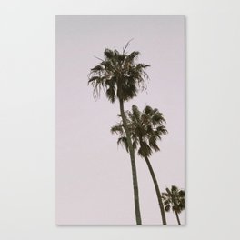 Pink Palm Trees Canvas Print