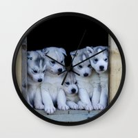puppies Wall Clocks featuring Husky puppies by Nathalie Photos