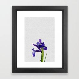 Iris Still Life, Flower Photography Framed Art Print