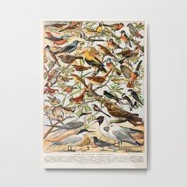 Adolphe Millot - Oiseaux espèces utiles 01 - French vintage ornithology poster Metal Print