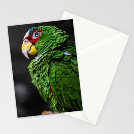 Matey Stationery Cards