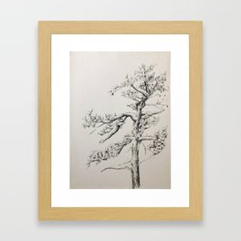 Pine Tree in Winter Framed Art Print