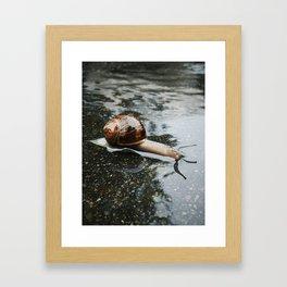 Swimming Snail Framed Art Print