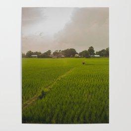 The Rice Paddies of Nepal 001 Poster