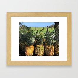 roadside pineapples in Hawaii Framed Art Print