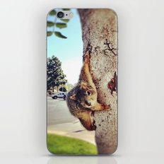 Good morning, Mr. Squirrel. iPhone & iPod Skin