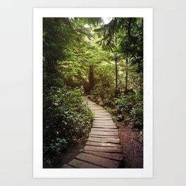 trail to Cape Flattery Art Print