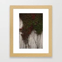 Vine wall Framed Art Print