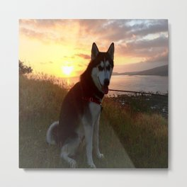 Wolfie the Siberian Husky Metal Print