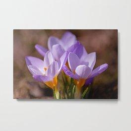 Blooming purple Metal Print