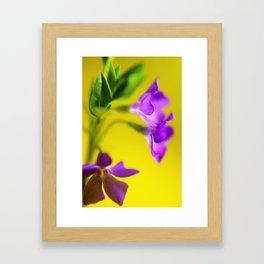 yellow and purple trio Framed Art Print