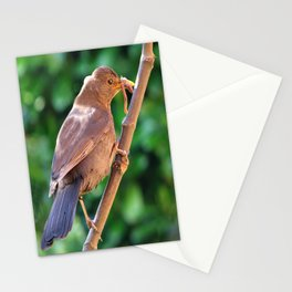 The Early Bird Stationery Cards