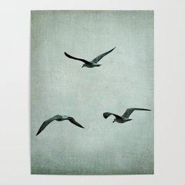 3seagulls I Poster