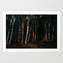 Broken Light Over Birch Bark Art Print