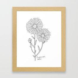September Birth Flower Aster Ink Drawing / Black and White Aster / Floral Art Framed Art Print