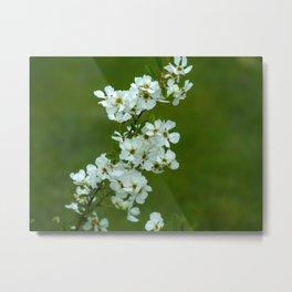 Apple tree blossom Metal Print