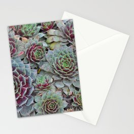 Colorful hens and chicks plants Stationery Cards