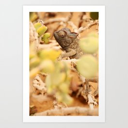 NAMIBIA ... the  chameleon Art Print