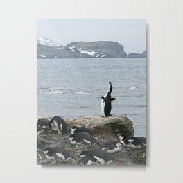 Chinstrap Penguins, Antarctica 2006 Metal Print