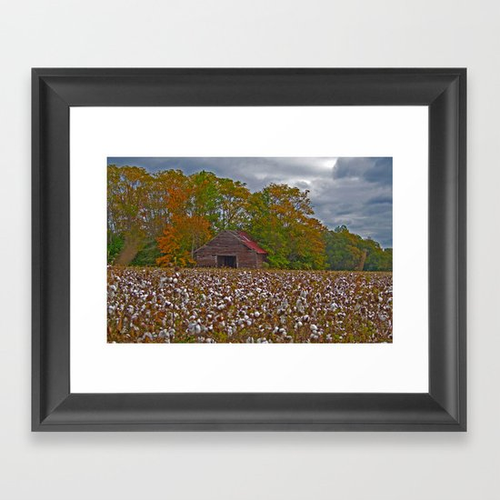An Old Barn in a Cotton Field Framed Art Print