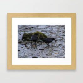 Hungry Crows Framed Art Print