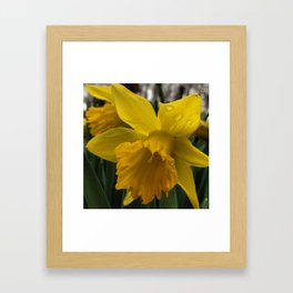Spring is Almost Here Framed Art Print