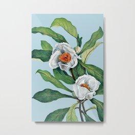 Franklin tree flowers Metal Print