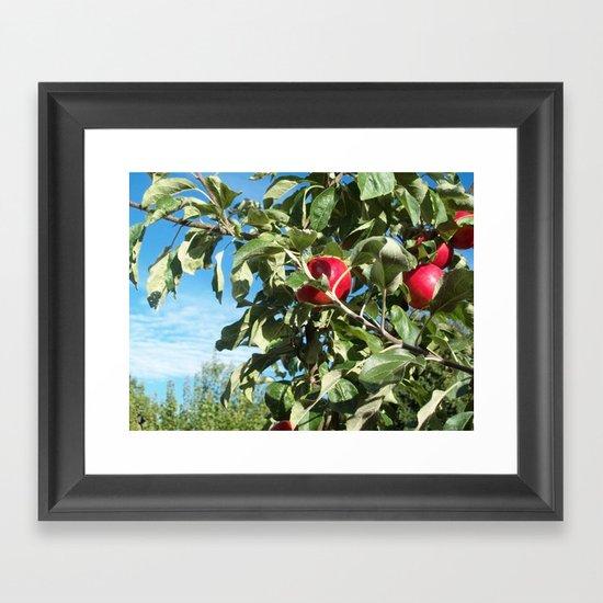 Apples to Apples Framed Art Print