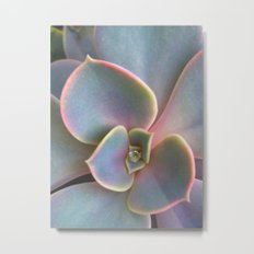 Succulent Dew Drop Metal Print