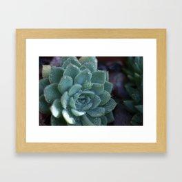 Desert Life Framed Art Print