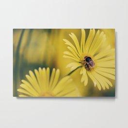 Bumble Bee - Great Leopard's Bane Metal Print