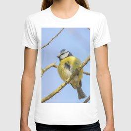 Blue tit on branch, Eurasian blue tit, (Cyanistes caeruleus) Cute little Bird T-shirt