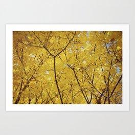 Colorado Autumn in Yellow Art Print