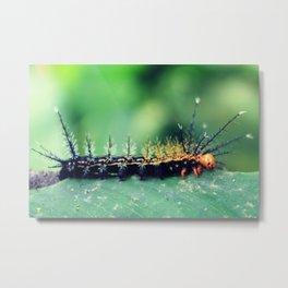 Moth Caterpillar Metal Print