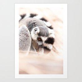 Ring-tailed lemur Art Print