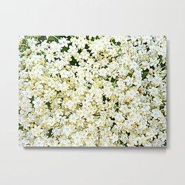 Elderflower Blossom - Tiny Flowers - Creamy White With Yellow Metal Print