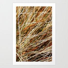 Textura: Dry Grasses Art Print