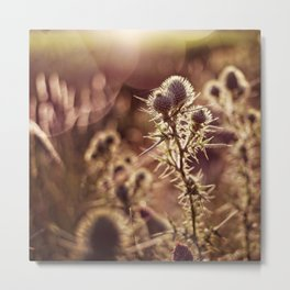 prickly glow Metal Print
