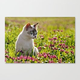 tortoiseshell cat in a meadow Canvas Print