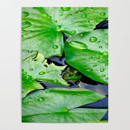 Peek  A Boo frog Poster