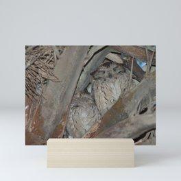 Indian scops owls sleeping in a palm. Mini Art Print