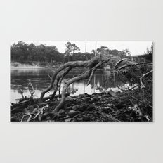 Root Branches Canvas Print