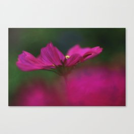 Grace of a Cosmo Canvas Print