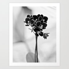 Vegetal Portrait II: Black Orchid Art Print