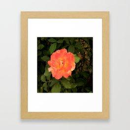 Ash Laden Leaves Framed Art Print