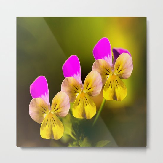Colorful violets  - beauties of nature - #Society6 - #Buyart Metal Print