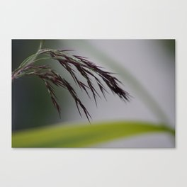 Evening hay Canvas Print