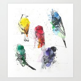 Palette Birds Art Print